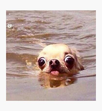 Swimming dog Photographic Print