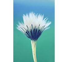 natural brush Photographic Print