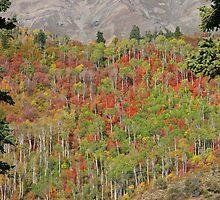 Nebo Loop Utah by Judson Joyce