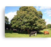 County Clare farm scene 2 Canvas Print