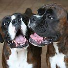 Luthien & Arwen -Boxer Dogs Series- by Evita