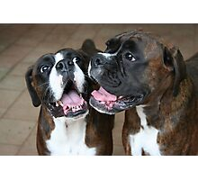 Luthien & Arwen -Boxer Dogs Series- Photographic Print