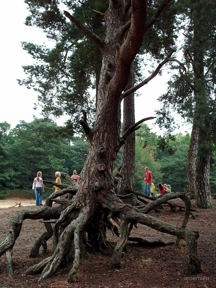 The roots of a tree by ienemien