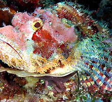 Smallscale Scorpionfish by MattTworkowski