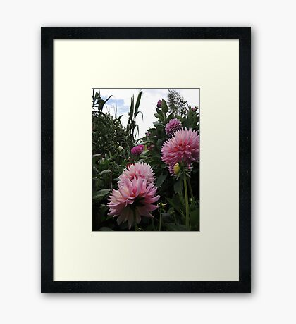 Perfume Of Pinks Framed Print