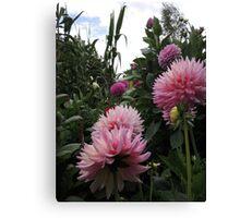 Perfume Of Pinks Canvas Print