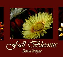 Fall Blooms by DavidWayne
