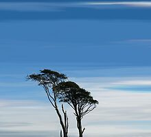 Southern Upland Way Trees by bluefinart