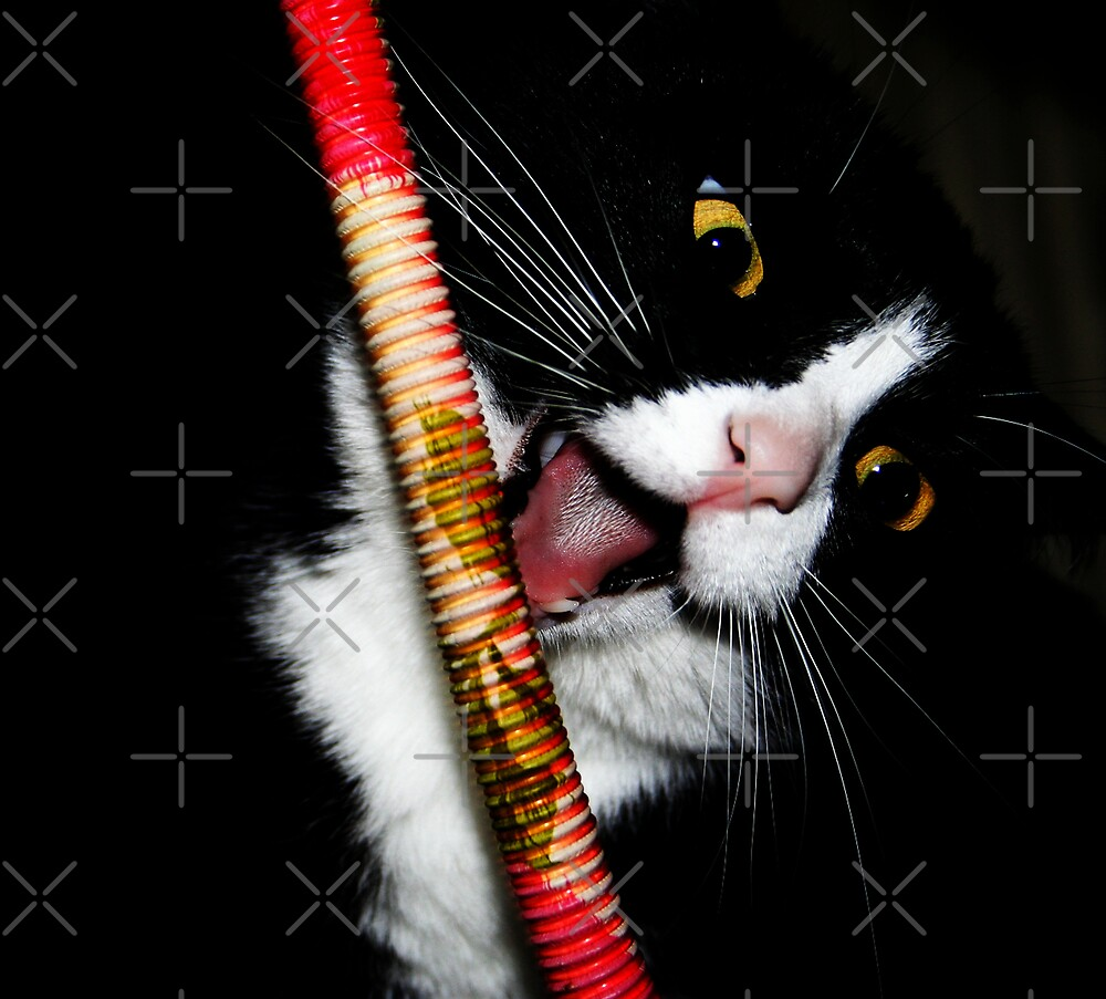 Naughty Kitty!! by Ingrid Beddoes