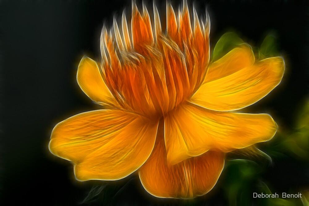 Orange Crown Flower by Deborah  Benoit