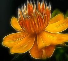 Orange Crown Flower by Deborah  Benoit