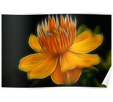 Orange Crown Flower Poster