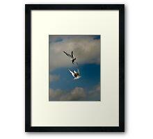 Male and female Terns Framed Print