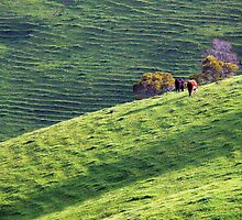 Green Pastures 2** by helmutk