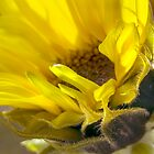 Baby sunflower by beebite