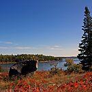 Fall Scenery by Teresa Zieba