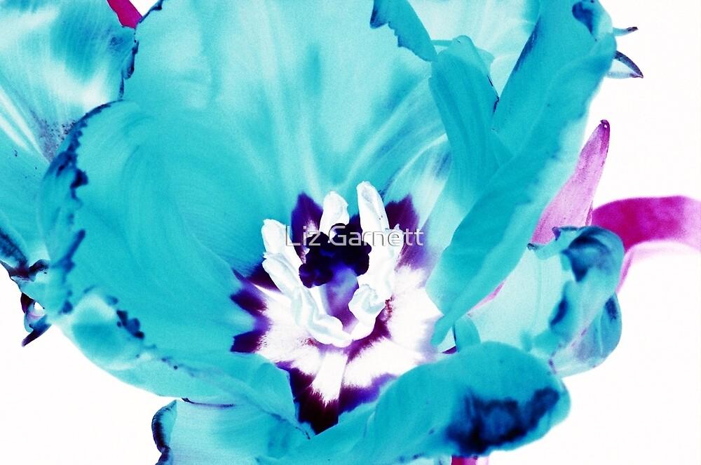 Blue Tulip - UK598/21p - www.lizgarnett.com by Liz Garnett