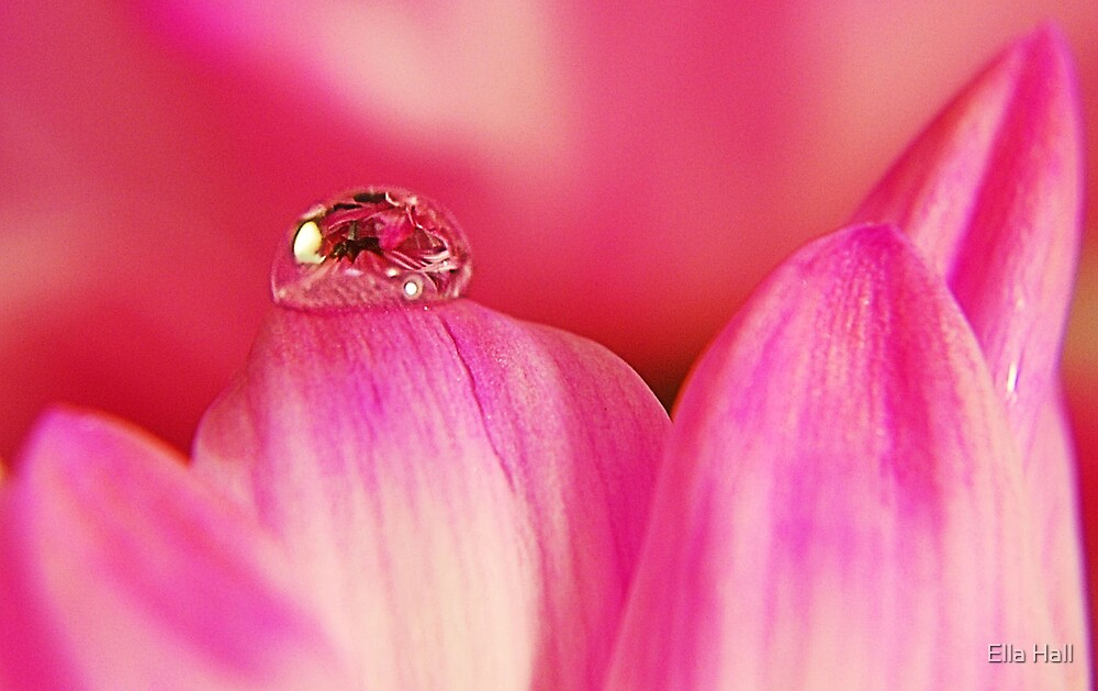PINK Collection for the Cure - Her tears by Ella Hall