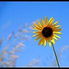 Sunny Flower by Karen Keaton