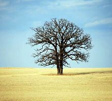 A Tree in the Middle of Nowhere by Karen Keaton