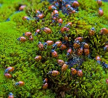 Ladybugs on Mossy Rock by John Butler