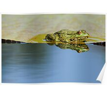 frog in the mirror Poster