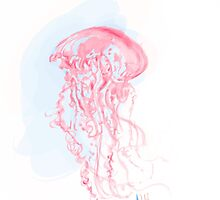 Jelly Fish by menii