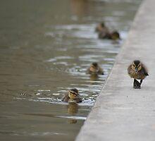 Duckling strut by OlliCrusoe