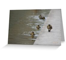 Duckling strut Greeting Card