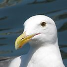Seagull by Gloria Abbey