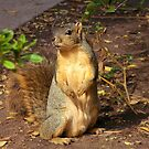 One Very Happy Squirrel by Gloria Abbey