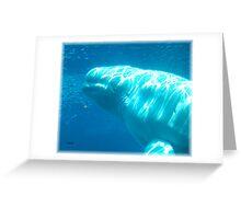 Beluga Angel Greeting Card