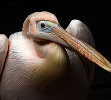 Pelican Beauty by Bobby McLeod