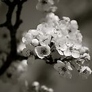 Blossom III by Pamela Hubbard