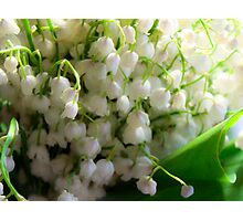 Lilies of the valley Photographic Print