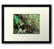 Lilies of the valley 3 Framed Print