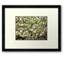 Lilies of the valley 5 Framed Print