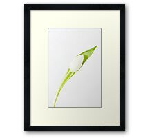 Single White Tulip Framed Print