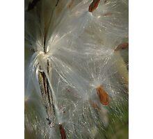 Silks Photographic Print