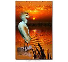 Golden ~ (Egret) Photographic Print