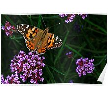 Painted Lady Poster