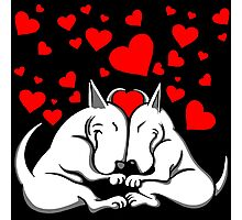 Bull Terriers In Love Photographic Print