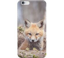 Kit Fox 2011-3 iPhone Case/Skin