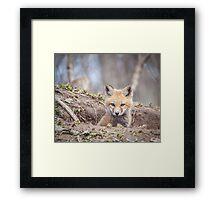 Kit Fox 2011-3 Framed Print