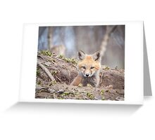 Kit Fox 2011-3 Greeting Card
