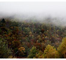 Fog lifting  by apolonia-003