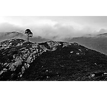 Highland Tree Photographic Print