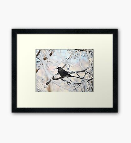 crow on snow-covered tree Framed Print