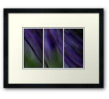 Wysteria Framed Print