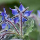 Unusual purple flower 2 by lovethrugrace